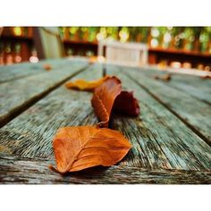 Is it autumn already? Share your best changing  photos with us and tag #onepluslife! Taken with the #OnePlus2 by danfear_ by oneplustech
