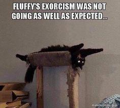 New meme compilation (cat memes,dog memes,pets memes,animal memes) Funny Animal Memes, Cute Funny Animals, Funny Animal Pictures, Cat Memes, Funny Cute, Cute Cats, Funny Memes, Memes Humor, Jokes