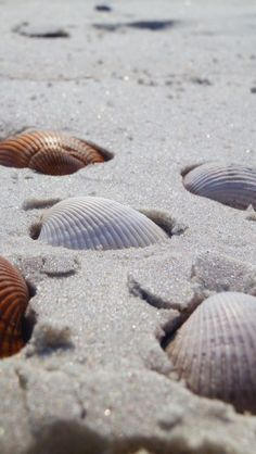 sea shells half buried in beach sand Beach Aesthetic, Summer Aesthetic, Orange Aesthetic, Shells And Sand, Sea Shells, I Love The Beach, Am Meer, Photo Instagram, Simple Pleasures