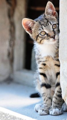 I JUST LOVE CATS BOTH WILD AND DOMESTIC. ACTUALLY I LOVE ALL ANIMALS AS I BELIEVE THEY ARE PART OF GOD'S CREATION TO BE LOVED AND CARED FOR....