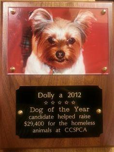 """___Dolly's Woofington Post___"": My Photo Blog"