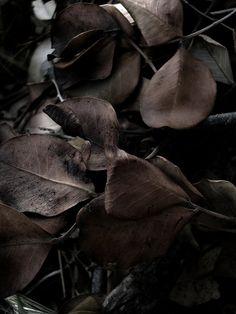 Feuilles mortes Brun chocolat Automne