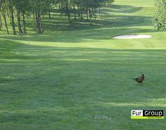 Golfcourse, The Rotterbergen, Bergschenhoek, The Netherlands