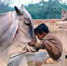 The love and respect towards cow. Yes, we Indians are proud of it that we not only love cats and dogs but all other creatures. The love and respect towards cow. Yes, we Indians are proud of it that we not only love cats and dogs but all other creatures. Animals For Kids, Animals And Pets, Cute Animals, Baby Animals, Beautiful Creatures, Animals Beautiful, Image Emotion, Amor Animal, Tier Fotos