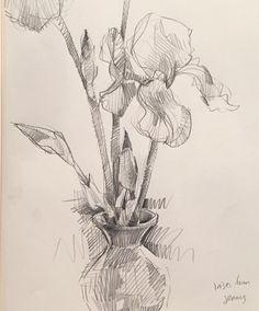 Irises. #sketch #drawing #skechbook by Sarah Sedwick. 5.2016