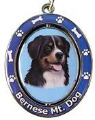 Bernese Mt. Dog