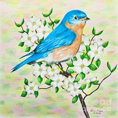 color and print out bluebird - Google Search