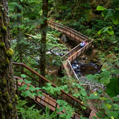 Top Waterfall Trails in the Willamette Valley - Travel Oregon New Mexico Road Trip, Oregon Road Trip, Oregon Trail, Oregon Vacation, Pacific Coast Highway, Death Valley, Vancouver Island, Route 66, Washington State