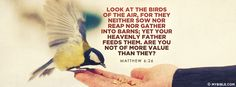 Look at the birds of the air, for they neither sow nor reap nor gather into...