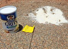 Keep ants away from your camp by bringing along instant grits. The grits aren't for eating, although you could have some as well, but rather for sprinkling around your campsite. They keep ants away. Tent Camping, Outdoor Camping, Camping Ideas, Campsite, Camping With Kids, Glamping, Camping Must Haves, Camping Tips, Camping And Hiking