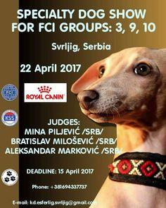 Specialty Dog Show for FCI Groups: 3, 9, 10-Svrljig (Serbia)-22 April 2017