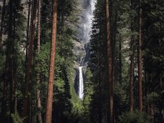 Yosemite from Cereal Magazine V. Forest Fairy, New Forest, Cereal Magazine, Brecon Beacons, Still Life Photographers, Next Holiday, Future Travel, Heaven On Earth, Adventure Is Out There