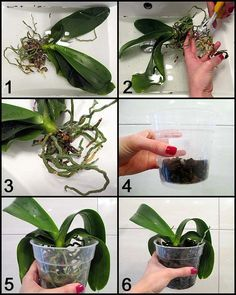 Wonderful Cost-Free Orchid Flower care Popular Have a lovely orchid in the home that you're not very convinced exactly how to maintain?