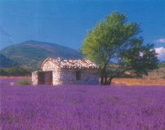 Provence, France. On mu bucket list to stand in a lavender field.