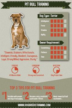 Pit Bull Training Infographic