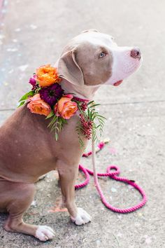 a floral wreath for the pup, photo by Vue Photography http://ruffledblog.com/pattern-play-wedding-inspiration #weddingideas #pets #petsatweddings
