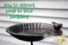 How to attract birds to your back yard.
