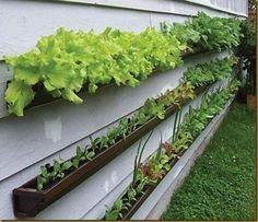 Create a window-box veggie patch using guttering.