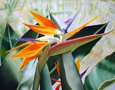 BIRD OF PARADISE, Oil on Canvas, by Ora Sorensen