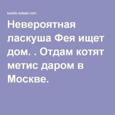 Невероятная ласкуша Фея ищет дом. . Отдам котят метис даром в Москве.