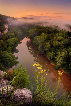 Black-eyed Susans on the Bluff,  Missouri, USA, Photo by  Robert Charity.
