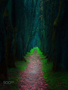 Nature Path in Bosnia Natures Path, Magical Forest, Art Poses, Stairway To Heaven, Believe In Magic, Beautiful Mind, Great Shots, Great Pictures, Tree Art