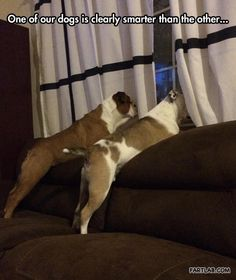 Not the swiftest boxer in the ring, so to speak…#funnyanimals