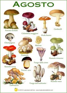 Il calendario dei funghi commestibili più comuni in Italia Truffle Mushroom, Mushroom Art, Mushroom Fungi, Poisonous Mushrooms, Edible Mushrooms, Porcini Mushrooms, Stuffed Mushrooms, Mushroom Species, Pumpkin Varieties