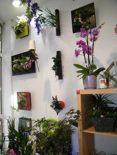 La boutique Au sabot de Vénus 89 rue de Famars, Valenciennes 59 300