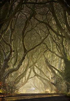 """Entwined - The Dark Hedges"" ~ by Gary McParland, taken in Armoy, County Antrim, Northern Ireland.  The Dark Hedges is an avenue of 300 year old beech trees situated along Bregagh Road, 3 miles from the village of Stranocum."