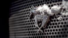 Mustang Meltdown | Vaughn Gittin Jr. Shows off his 2015 Livery on a 2015...
