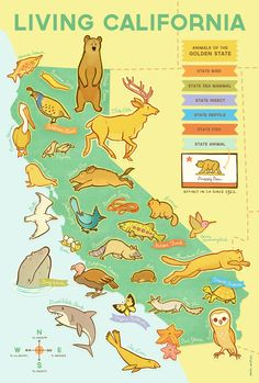 Living California Wildlife Map - Erica Sirotich Illustration