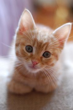 Not a huge cat fan but love the expression on this kittens face!