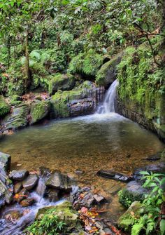 Puerto Rico is the go-to destination in the Caribbean. This is El Yunque rainforest.