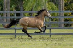 Sons of the Wind - Lusitano Farm