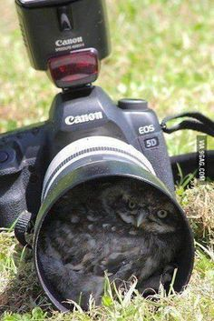 Funny Animals - Owl