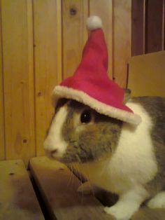 Hyvää joulua kaikille