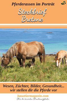 Wir stellen dir die starken Franzosen genauer vor.   #haustiermagazin #pferderassen #grossepferde #starkepferde #arbeitspferde #bretone #frankreich Shire Horse, Movie Posters, Movies, Art, Big Horses, Draft Horses, Craft Art, Films, Film