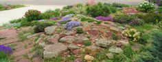 Why a rock garden? THIS is why!
