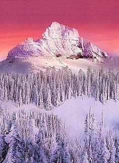 Mt. Rainier National Park - Washington - Kevin McNeal
