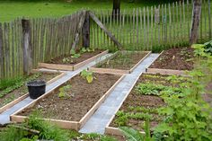 moestuin Garden Hoe, Herb Garden, Garden Beds, Vegetable Garden, Home And Garden, Veg Patch, Back Gardens, Growing Vegetables, Fruit Trees