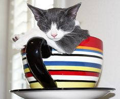 Cat sleeping in an oversized teacup. 26 photos of cats sleeping wherever they want, however they want. Baby Cats, Cats And Kittens, I Love Cats, Cute Cats, Funny Cats, Cat Yawning, Cat Traps, Owning A Cat, Cat Quilt