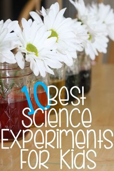 10 Experiments for Your Little Scientist!