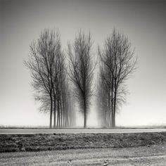 Tree Landscapes – Fubiz Media