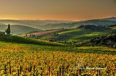 Chianti vineyards in Autumn -