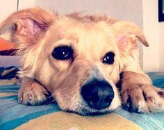 Mestize Laika …träumt schon von weißen Weihnachten… ❆ ❆ ❆ Hundename: Laika / Rasse: Mestize Mehr Fotos: https://magazin.dogs-2-love.com/foto/mestize-laika/ Foto, Hund, Winter