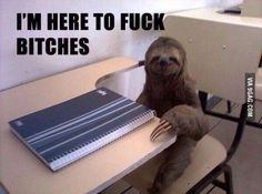 ohh sloth, how lovely, but wait.. what?