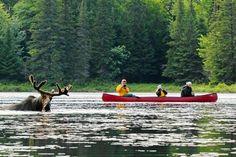 Excursion en canoë et séjour en chalet dans le parc Algonquin