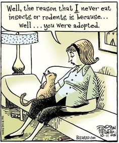 Bizarro: Well, the reason that I never eat insects or rodents is because well, you were adopted. Crazy Cat Lady, Crazy Cats, Funny Cartoons, Funny Cats, Funny Animals, Funny Humor, Funny Quotes, I Love Cats, Cool Cats