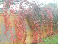 sonbahar renkleri